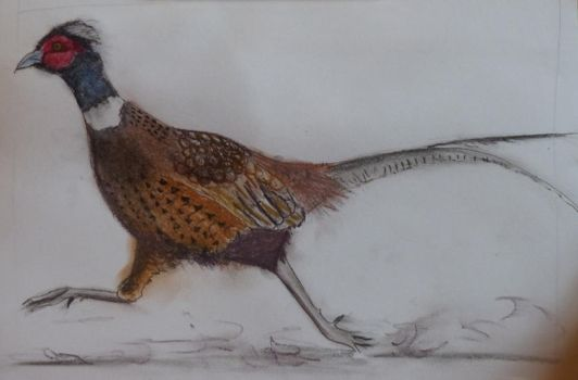 Pheasant in Tinted Charcoal by Jills-Designs