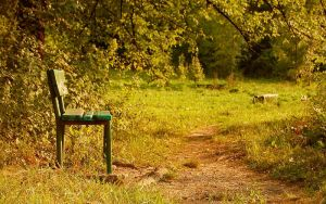 Waiting For Autumn by Alexandru1988