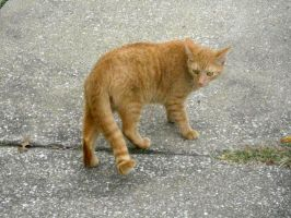 Cat Stock 29 by Orangen-Stock
