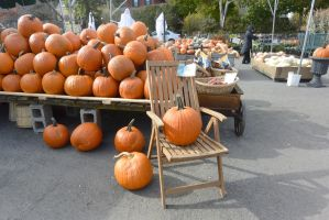 Placed In the Chair, Orange Pumpkin Display by Miss-Tbones