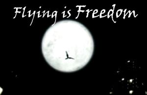 Maximum Ride-Flying Is Freedom by xXThing1Xx