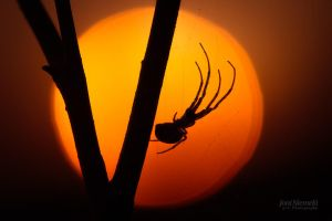 Spider At Dusk II by JoniNiemela