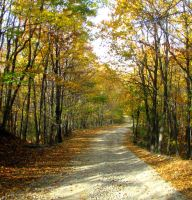 Autumn Road by stefanpriscu