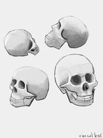 Skull Studies by circuitleaf