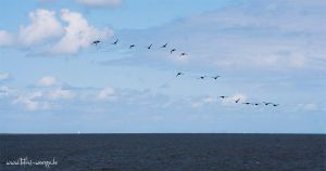 Birds and the Sea by sixhundredsixty