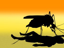Mosquitoes by aNgr