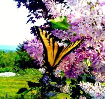 """""""Ill Flutter By,LadyButterfly"""" by LostAtSeaForever"""