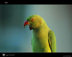 Thathe... by vinayan