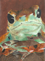 juvenalia 1: the frog by persephone-the-fish
