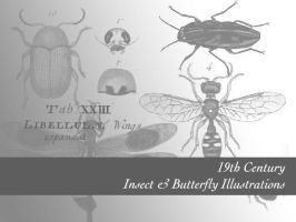 Insects: Naturalists by remittancegirl
