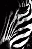 Zebra BW by LS-Coloringlife