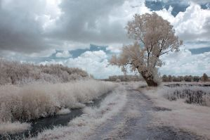 Infrared view 01 by Anntylus