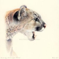Mountain lion portrait by theOlven