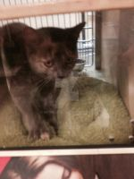petsmart spring hill cats of day 6/10/14 by michelous