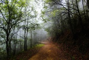 The road to silent hill by luiss9