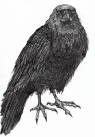 Ink Crow by Chobek