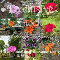 Exclusive Stock-Floral by inunokanojo