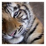Nap Interrupted by HeWhoWalksWithTigers
