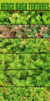 Hedge Bushes Textures by sdwhaven