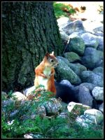 Squirrel at the cemetary - 3 by ReiraSuperstar