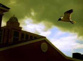 Storm Over Bird Over Dying Cit by Madhorse5