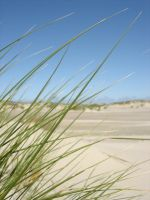 reed in the dunes by mb-neo