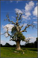 The Half Dead Tree by Hitomii