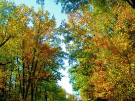 Fall trees looking up by Heidipickels