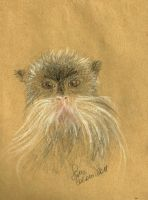The emperor tamarin by FiabeSCa