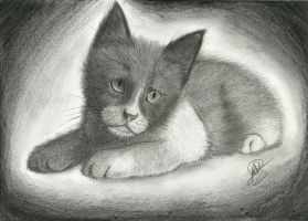 Cat Drawing by XAllenX