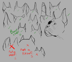 Boxer Cropped ear crappy tutorial by StrangeFelon