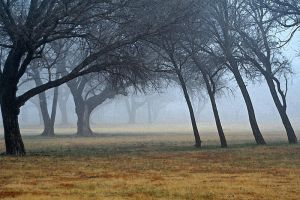 Winter at the Golf course by EMCoetzee