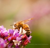 .:: Little bee ::. by Whimsical-Dreams