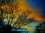 Sunset Trees by aliwelles