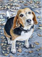 Beagle Autumn by ArtsandDogs