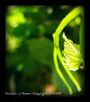 baby vine leaf -improved- by Sula88