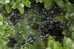 Waterdroplets on a spider's nest by linneaphoto