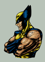 Wolverine colored by mindflenzing