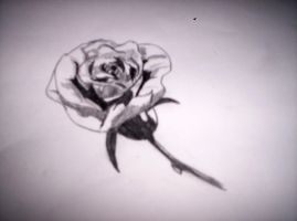 a rose by Itsnotmylife