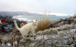 white cat conquered ice by Mari-Ghostly
