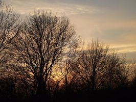 Tree in the Sunset x3 19.01.11 by Dark-Angel15-2010