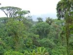 Rainforest Canopy by thatrevmans
