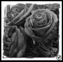 Roses Black and white. by heely