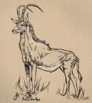 sable antelope by captainhawkeh