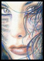Animale - ACEO by Carol-Moore
