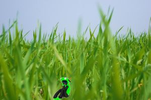 In alot of grass by Mrs-Voorhees13
