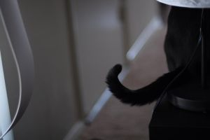 Cat Lamp by Skellevision