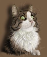 Portrait of a Lady Cat by RaggedVixen