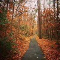 Riverbanks Zoo and Gardens: Forest Path by Natures-Studio