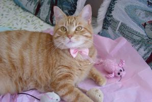 Dressed in pink by lucytherescuedcat